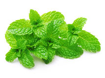 Green mint leaves isolated Royalty Free Stock Photo
