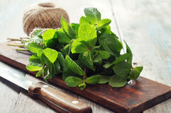 Green mint leaves Stock Photos