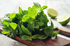 Green mint leaves Royalty Free Stock Photo
