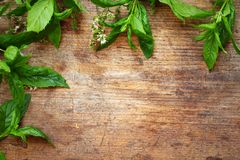 Green leaves on wooden background. Green mint leaves on wooden background Royalty Free Stock Photo