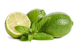 Green mint and limes on white background stock image