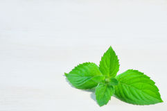Green mint on wooden background Royalty Free Stock Photo