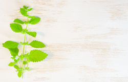 Green mint on wooden background Royalty Free Stock Photography