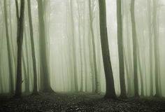 Green mist in an enchanted mysterious forest Royalty Free Stock Photography