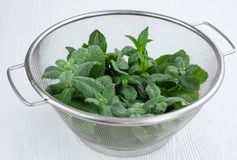 Green mix of fresh mint and melissa in strainer bowl. Green herbal mix of fresh mint and melissa herbs in stainless metal strainer bowl on white wooden stock photos