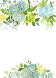 Green mix of hydrangea, succulents, echeveria, eucalyptus, wildf. Lowers, herbs and plants vector design floral frame. Wild rustic wedding flowers. All elements Royalty Free Stock Photo
