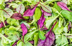 Green mix of salad leaves top view background. Stock Images