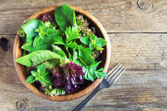 Green mixed salad leaves Royalty Free Stock Image
