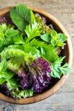 Green mixed salad leves Stock Image