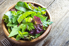 Green mixed salad leves Royalty Free Stock Photography