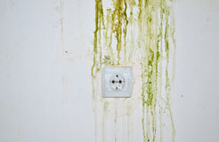 Green Mold on Wall with Power Plug Stock Photo