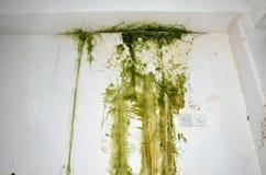 Green mold on a wall Stock Photos