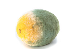 Green moldy lemon citrus fruit isolated. Damaged food. Royalty Free Stock Images
