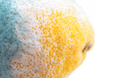 Green moldy lemon citrus fruit isolated. Damaged food. Royalty Free Stock Photography