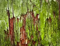 Green moldy old wood texture Stock Image