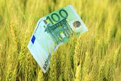 Green money Stock Image