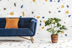 Green monstera plant next to a dark blue sofa with an orange pillow in a white living room interior with lastrico wallpaper. Real. Photo. concept royalty free stock images