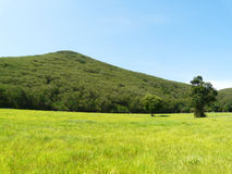 Green mountain. Green landscape that soft touch Royalty Free Stock Image