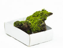 Green moos with soil on a carton box with white background Royalty Free Stock Photos