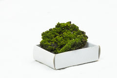 Green moos with soil on a carton box with white background Stock Photos