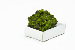 Green moos with soil on a carton box with white background Royalty Free Stock Photo