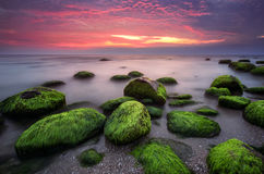 Green morning Royalty Free Stock Photography