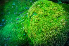 A Green mos cover the rock in forest , Abstract Background. Green mos cover the rock in forest , Abstract Background Stock Photo