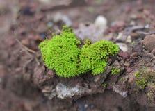 Green mos Stock Photo