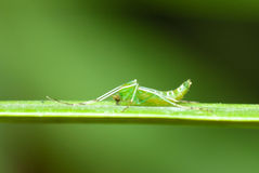 A green mosquito Stock Photo