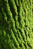 The green moss. The beautiful sunny moss on an isolated tree in the countyside Stock Images
