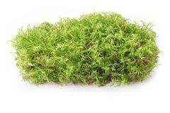 Green moss. On white background Stock Photo