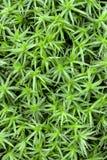 Green moss Arkivfoton