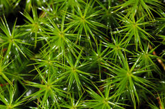 Free Green Moss Stock Photography - 27271852