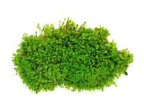 Free Green Moss Stock Images - 60012024