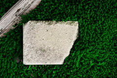 Green moss abstract. Board and brick on green moss Royalty Free Stock Photos