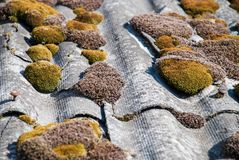 Green moss and algae on slate roof tiles. royalty free stock photo