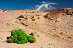 Green moss in Andes altiplano landscape Bolivia Stock Image