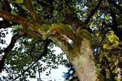 Green moss in Apuseni Mountains, Transylvania Royalty Free Stock Photos