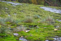 Green Moss and Autumn Grass with Water Stock Photo