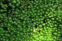 Green Moss background Stock Photos