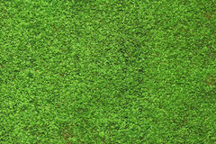Green moss background. Abstract background nature moss green closeup Stock Photo