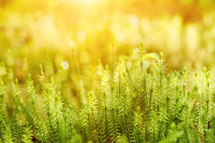 Green moss background Stock Photo