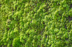 Green moss background Stock Images