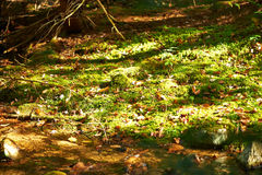 Green moss background Royalty Free Stock Images