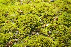 Green moss background. Stock Photo
