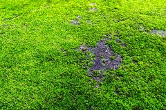Green moss background stock photo