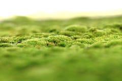 Green moss background Stock Photos