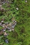 Green moss Stock Photos