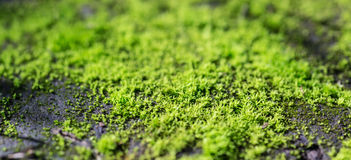 Green moss. Stock Photos