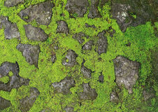 Green moss background texture beautiful in nature. Stock Image